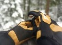 Eddie Bauer Guide Light Gloves